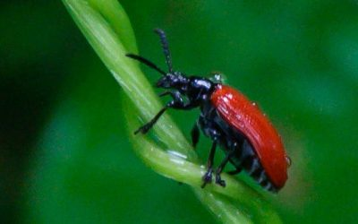How To Tell If You Have The Beetles?